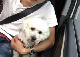 寻狗启示,希望灌云的爱狗人士帮忙找一下,它是一只非常可爱的宠物狗狗,希望它早日回家,不要变成流浪狗。