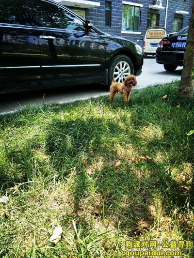 滨州找狗,无棣恒丰国际丢的狗狗,求求大家帮我找找!,它是一只非常可爱的宠物狗狗,希望它早日回家,不要变成流浪狗。