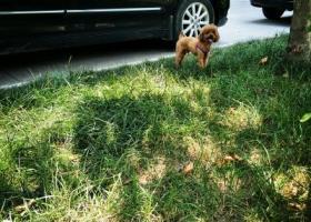 寻狗启示,无棣恒丰国际丢的狗狗,求求大家帮我找找!,它是一只非常可爱的宠物狗狗,希望它早日回家,不要变成流浪狗。
