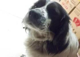 寻狗启示,寻狗启示,我的爱狗,请大家帮帮忙,它是一只非常可爱的宠物狗狗,希望它早日回家,不要变成流浪狗。