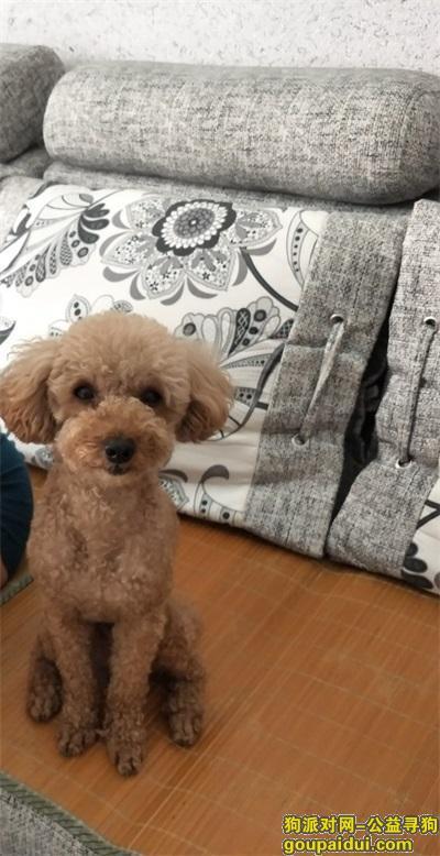 白城寻狗网,本人小狗于7月25日上午9点左右在鹤林苑小区走失,它是一只非常可爱的宠物狗狗,希望它早日回家,不要变成流浪狗。