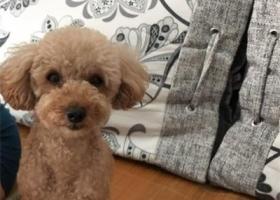 寻狗启示,本人小狗于7月25日上午9点左右在鹤林苑小区走失,它是一只非常可爱的宠物狗狗,希望它早日回家,不要变成流浪狗。
