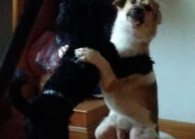 寻狗启示,寻找黄毛狗狗(大冶),它是一只非常可爱的宠物狗狗,希望它早日回家,不要变成流浪狗。