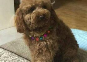 寻狗启示,我是内蒙古的,去西宁路上丢失心爱的狗狗,它是一只非常可爱的宠物狗狗,希望它早日回家,不要变成流浪狗。