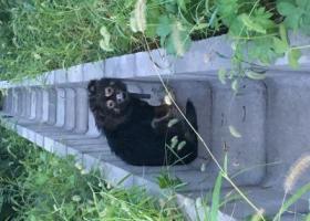 寻狗启示,为不知品种的黑毛犬寻找主人,它是一只非常可爱的宠物狗狗,希望它早日回家,不要变成流浪狗。