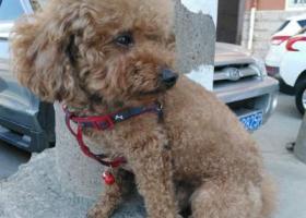 重金寻找我家8月17日在汝河西路丢失的爱犬