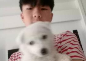 寻狗启示,江西会昌欧屋寻狗启事,它是一只非常可爱的宠物狗狗,希望它早日回家,不要变成流浪狗。
