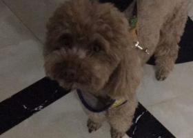 寻狗启示,心爱的狗狗丢失于17年8月18日,背上有个黄色的背带,它是一只非常可爱的宠物狗狗,希望它早日回家,不要变成流浪狗。