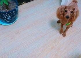 寻狗启示,宿迁泗洪河滨一号附近帮忙找狗,它是一只非常可爱的宠物狗狗,希望它早日回家,不要变成流浪狗。