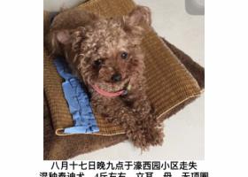 寻狗启示,南通 濠西园 附近 走失,它是一只非常可爱的宠物狗狗,希望它早日回家,不要变成流浪狗。