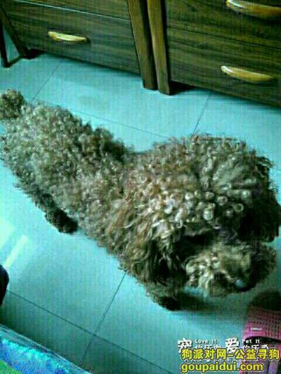 晋城寻狗启示,对它好好的,不想养了给我,它是一只非常可爱的宠物狗狗,希望它早日回家,不要变成流浪狗。