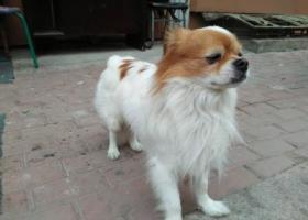 寻狗启示,在商大附近民安小区已经在这好几天了帮忙看看啊,它是一只非常可爱的宠物狗狗,希望它早日回家,不要变成流浪狗。