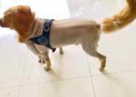 寻狗启示,寻找丢失的爱犬—宝宝,它是一只非常可爱的宠物狗狗,希望它早日回家,不要变成流浪狗。