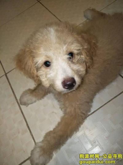 镇江找狗,寻狗启示,江苏镇江这里,它是一只非常可爱的宠物狗狗,希望它早日回家,不要变成流浪狗。