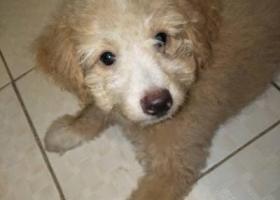 寻狗启示,寻狗启示,江苏镇江这里,它是一只非常可爱的宠物狗狗,希望它早日回家,不要变成流浪狗。
