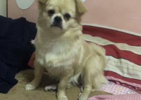 寻狗启示,自家小土狗,昨天晚上七点多的时候在银河花园小区里跑丢,它是一只非常可爱的宠物狗狗,希望它早日回家,不要变成流浪狗。