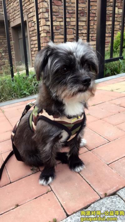 ,一只小黑狗丢了,急寻!,它是一只非常可爱的宠物狗狗,希望它早日回家,不要变成流浪狗。