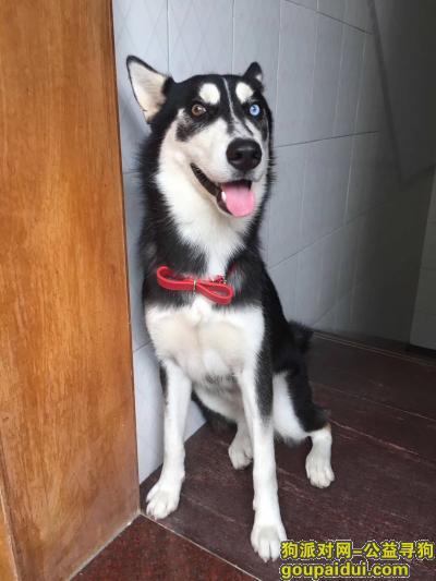 ,巡狗,它是一只非常可爱的宠物狗狗,希望它早日回家,不要变成流浪狗。
