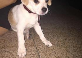 寻狗启示,家里的狗狗不见了,名叫b仔,它是一只非常可爱的宠物狗狗,希望它早日回家,不要变成流浪狗。