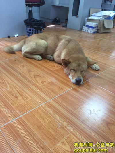 ,各位大神帮忙帮忙找狗狗,它是一只非常可爱的宠物狗狗,希望它早日回家,不要变成流浪狗。