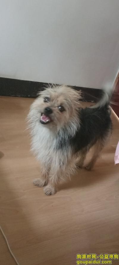 大庆寻狗启示,爱犬于2017.9.9日晚10点多在新村7-51附近丢失,它是一只非常可爱的宠物狗狗,希望它早日回家,不要变成流浪狗。