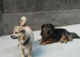 寻狗启示,我家狗狗走丢了如果有好心人找到还给我奖励2000元现金,它是一只非常可爱的宠物狗狗,希望它早日回家,不要变成流浪狗。