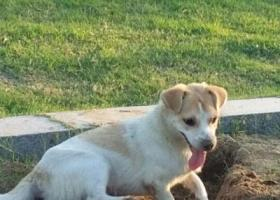 寻找爱犬阿旺母狗,个子中等宝善寺附近