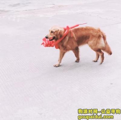 寻狗启示,寻找爱狗 请大家多多留意,它是一只非常可爱的宠物狗狗,希望它早日回家,不要变成流浪狗。