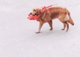 寻找爱狗 请大家多多留意