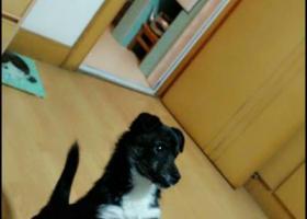 寻狗启示,请帮帮忙,生病狗狗走失两天,它是一只非常可爱的宠物狗狗,希望它早日回家,不要变成流浪狗。