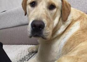 寻狗启示,寻狗启事(酬金5000元),它是一只非常可爱的宠物狗狗,希望它早日回家,不要变成流浪狗。