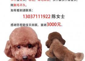 武昌徐东酬金3000寻爱犬!急!急!急!