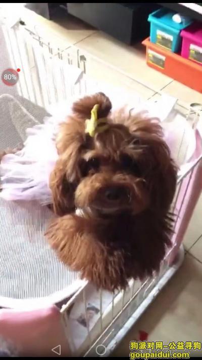 大庆找狗,寻找卡卡  酬金1000元,它是一只非常可爱的宠物狗狗,希望它早日回家,不要变成流浪狗。