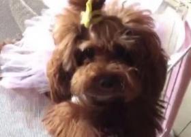 寻狗启示,寻找卡卡  酬金1000元,它是一只非常可爱的宠物狗狗,希望它早日回家,不要变成流浪狗。