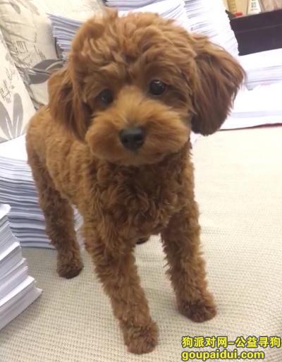 晋城找狗,泰迪狗狗在屋夏桥附近走失,它是一只非常可爱的宠物狗狗,希望它早日回家,不要变成流浪狗。