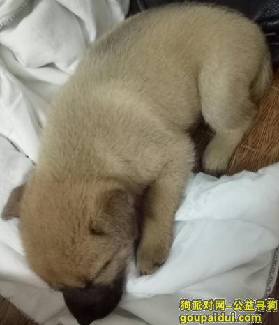 永州寻狗启示,寻狗启事丢失一只小黄狗,它是一只非常可爱的宠物狗狗,希望它早日回家,不要变成流浪狗。