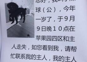 寻狗启示 北京石景山苹果园 黑色泰迪 男孩 1岁5斤短毛
