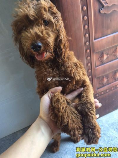 抚州寻狗启示,抚州捡到一只公泰迪,做了绝育的,一岁左右,很活泼的狗。,它是一只非常可爱的宠物狗狗,希望它早日回家,不要变成流浪狗。