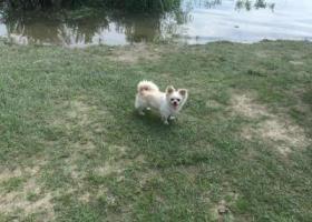 寻狗启示,请大家帮帮我,我已经快崩溃了,它是一只非常可爱的宠物狗狗,希望它早日回家,不要变成流浪狗。