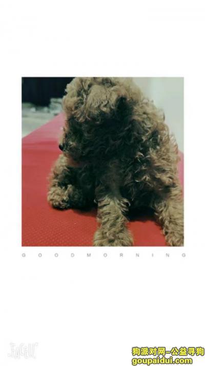 济源丢狗,gouzhaodao1l1,它是一只非常可爱的宠物狗狗,希望它早日回家,不要变成流浪狗。