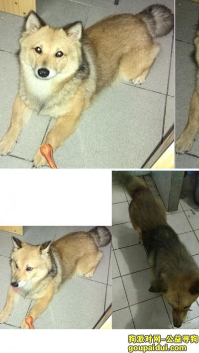 萍乡寻狗网,求助!萍乡芦溪县新泉 寻找狗狗,它是一只非常可爱的宠物狗狗,希望它早日回家,不要变成流浪狗。