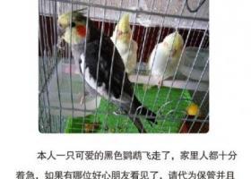 衡阳 2000元寻爱鸟