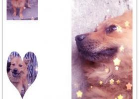 寻狗启示,江门江海区区大康路寻找爱犬,它是一只非常可爱的宠物狗狗,希望它早日回家,不要变成流浪狗。