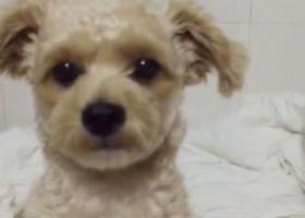 寻狗启示,宝贝你快回来,它是一只非常可爱的宠物狗狗,希望它早日回家,不要变成流浪狗。