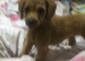寻狗启示,爱犬于18日早上八点左右走丢于肥城市工业三路龙翔家园附近,它是一只非常可爱的宠物狗狗,希望它早日回家,不要变成流浪狗。