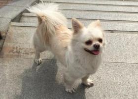 寻狗启示,狗狗走丢了,走丢时身上有黄色牵引绳,它是一只非常可爱的宠物狗狗,希望它早日回家,不要变成流浪狗。