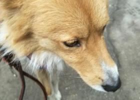 昨天在青山建一路捡到一只狗