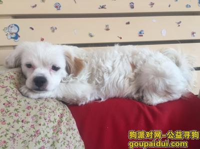 松原找狗,2017年9月20日下午丢的,它是一只非常可爱的宠物狗狗,希望它早日回家,不要变成流浪狗。