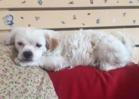 寻狗启示,2017年9月20日下午丢的,它是一只非常可爱的宠物狗狗,希望它早日回家,不要变成流浪狗。
