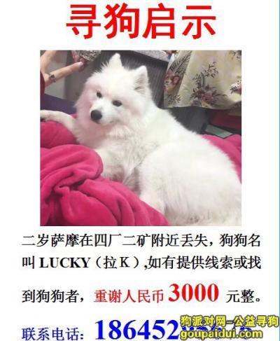 大庆寻狗网,大庆市找萨摩耶,一岁半左右,它是一只非常可爱的宠物狗狗,希望它早日回家,不要变成流浪狗。